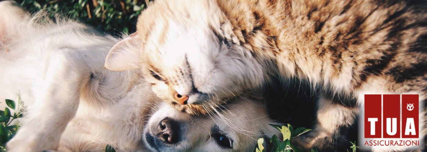 TUA PET: la soluzione per chi ama gli animali